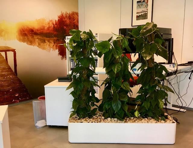 Prijzen kamerplanten huren voor event kantoor trouw evenement beurs bedrijf feest horeca kantoor tuin tropische in Limburg Vlaams-Brabant Antwerpen Brussel