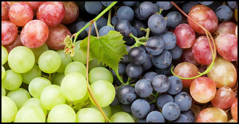 Grapes: A Potential Ally In Our Fight Against Cancer