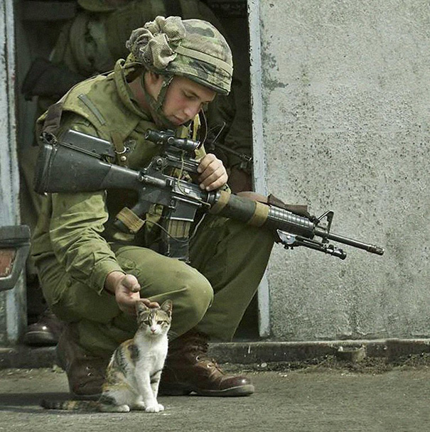 2. The Cat And The Soldier