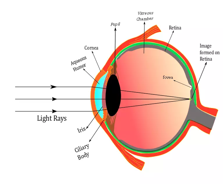 Normal Eye Diagram
