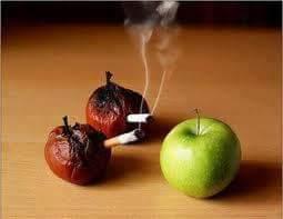 التفاح www.weghtlos.com