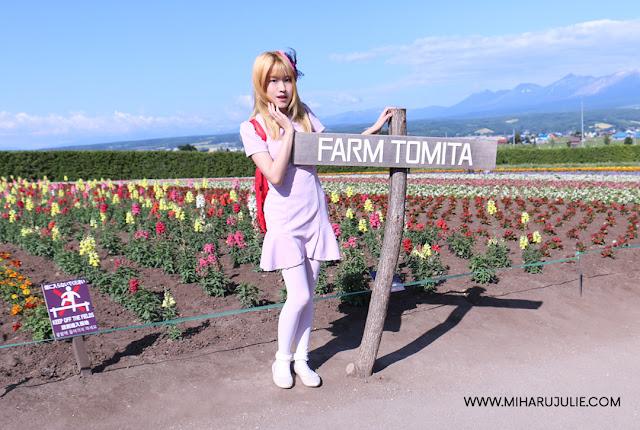 Lavender Fields of Farm Tomita at Furano, Hokkaido, Japan