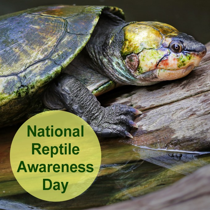 National Reptile Awareness Day Wishes Awesome Picture