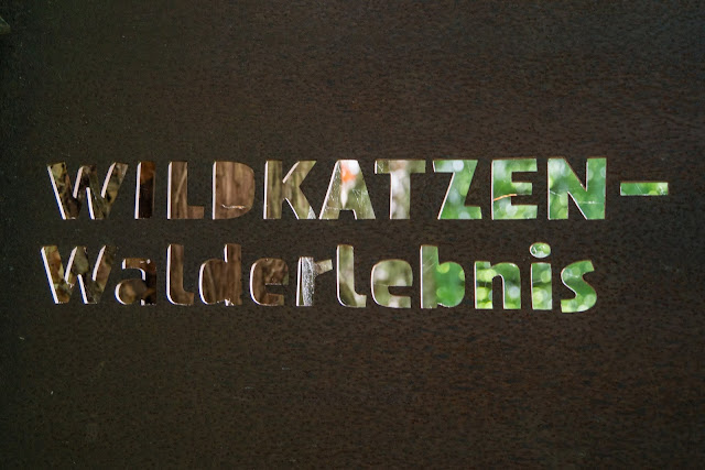 Wildkatzen-Walderlebnis und Wildkatzenstieg zum Wildkatzengehege Bad Harzburg 13