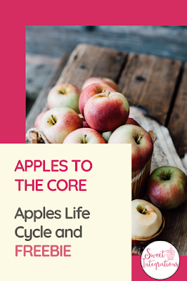 In this blog post, your lower elementary science students can learn about apples to the core. They can learn about the life cycle, apple investigations, and math activities. It's perfect for kinder and first graders. FREE activities are included. #apples #lifecycles