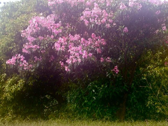 Flores no parque - CERET