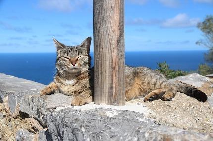 Gato sobre una roca en la playa tomando el sol.