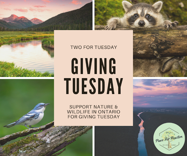 Giving Tuesday: Two things you can do to support Ontario nature and wildlife