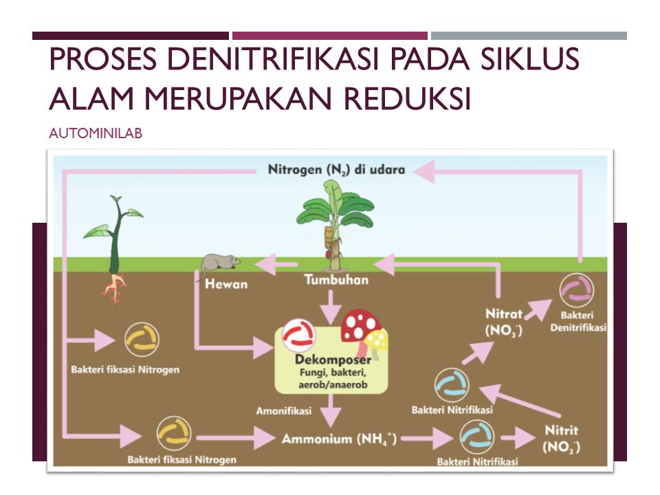 Proses denitrifikasi pada siklus alam merupakan reduksi