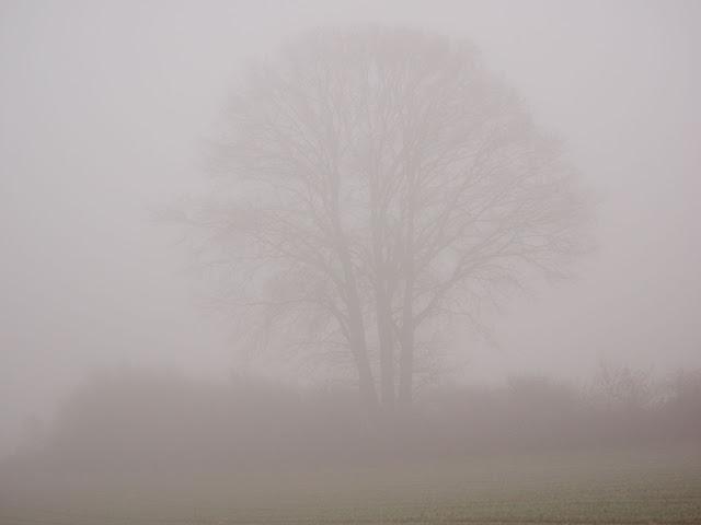 Den Baum fotografiere ich mehrmals im Jahr