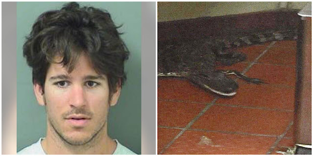 Florida man arrested for throwing alligator through drive-thru window