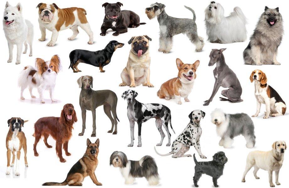 выбор собак с картинками она стала