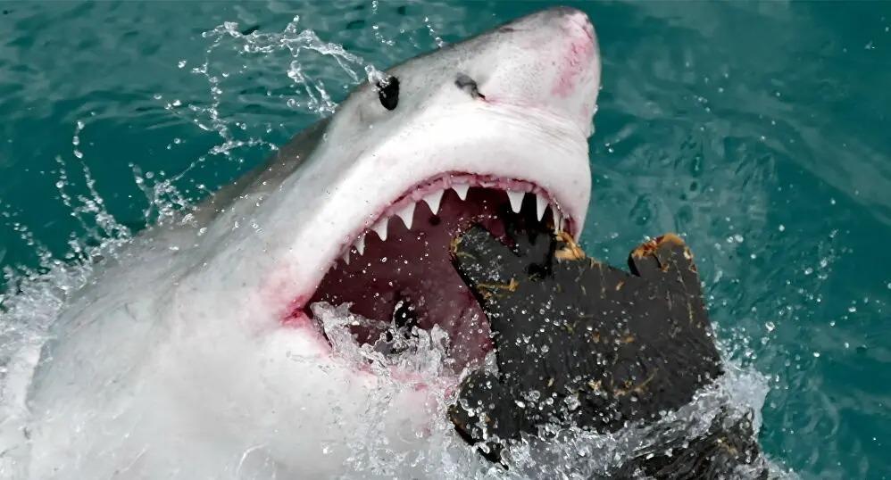 El ataque de un enorme tiburón blanco a una foca cerca de una playa