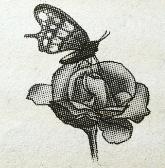 Soal USBN SD 2019 2020 tentang Simbiosis kupu kupu dan bunga