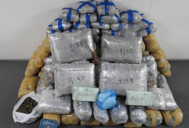 Με μουλάρια έφερναν τεράστιες ποσότητες ναρκωτικών από την Αλβανία και τα διοχέτευαν και στο Ναύπλιο (βίντεο)