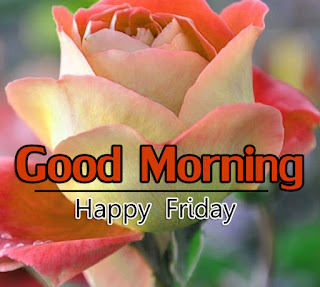 New Good Morning 4k Full HD Images Download For Daily%2B43