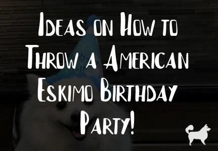 Ideas on How to Throw a American Eskimo Birthday Party!