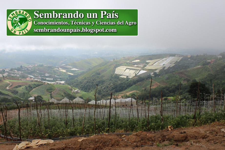 paisaje de los altos mirandinos venezuela