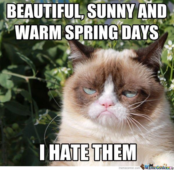 Grumpy%2BCat speak of the devil beware the coming of spring allergies