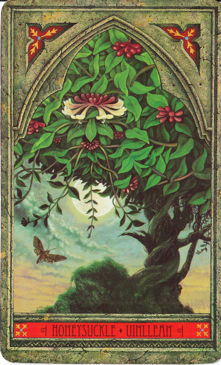 Rowan Tarot December 2012: Rowan Tarot: Green Man Tree Oracle: Honeysuckle