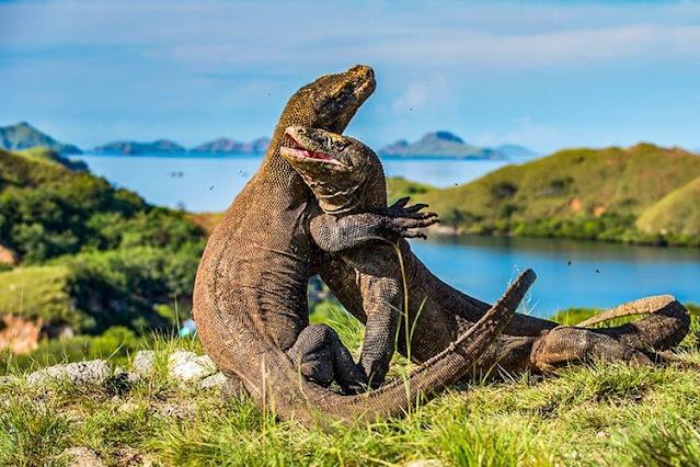 tempat wisata extreme pulau komodo