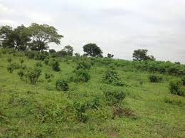 100 hectares of land acquired; FG To Establish Skill Acquisition Centers Nationwide 2