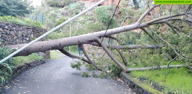 Los Bomberos retiraron ayer un árbol caído en Velhoco