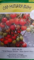 Benih, Ayuni, Benih Tomat Ayuni, Benih Tomat Ayuni, tomat, tahan virus,kuning, keriting, unggul, dataran rendah, tinggi, petani, Mutiara Bumi