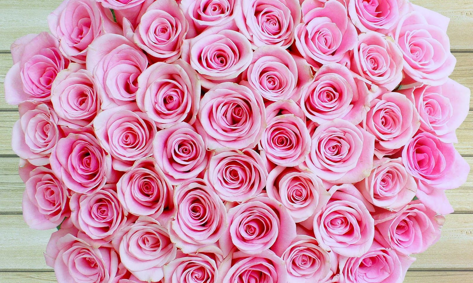 Pink Rose Hd Wallpapers 30