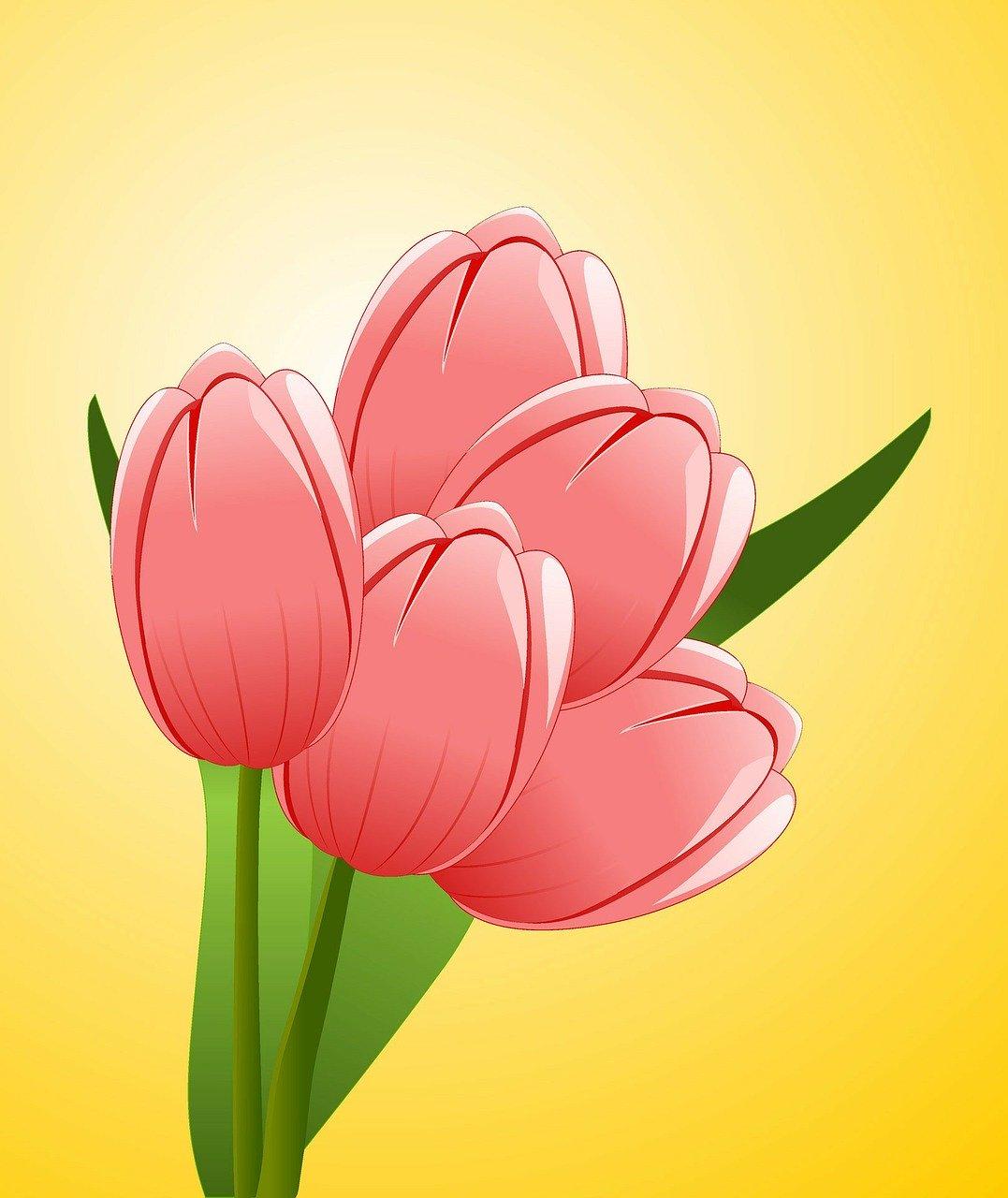 Gambar bunga tulip kartun