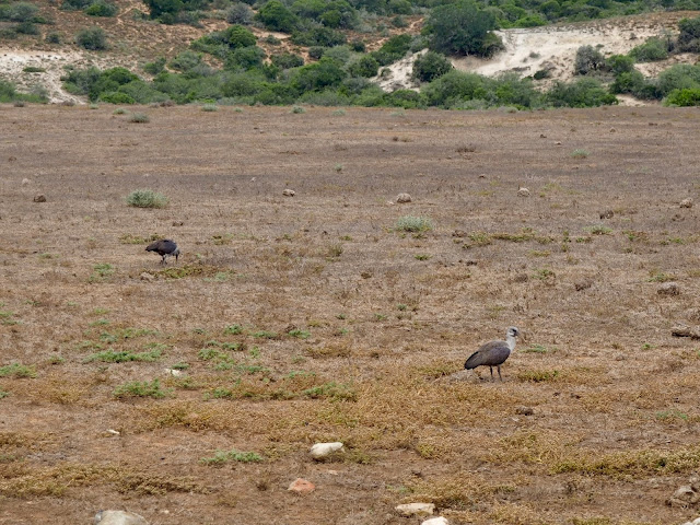 Bird species in Addo Elephant National Park, South Africa