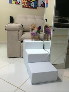 escadas para cães sala de visita