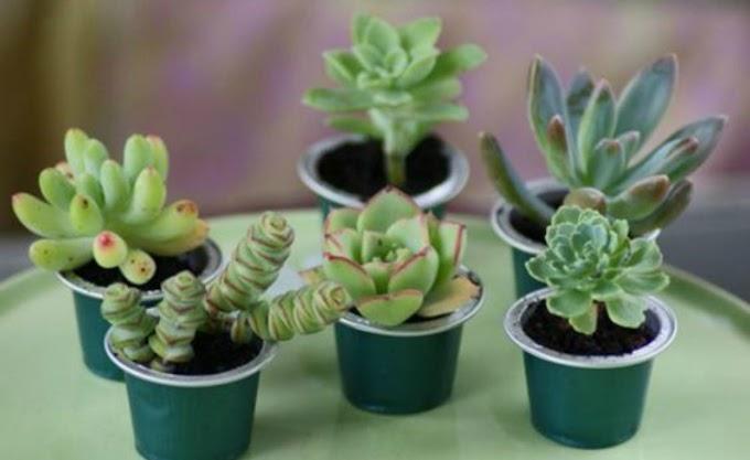 Aprenda a reciclar cápsulas de café e crie seu mini jardim