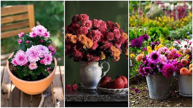 Το λουλούδι του μήνα: ΟΚΤΩΒΡΙΟΣ