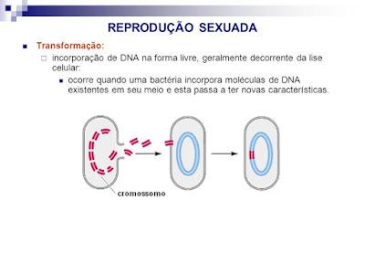 Bactérias: Reprodução