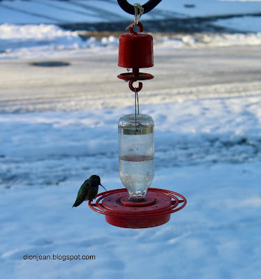 Tiny hummingbird on a feeder