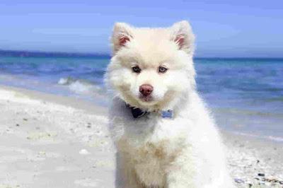 Italian dog breeds, Italian dogs