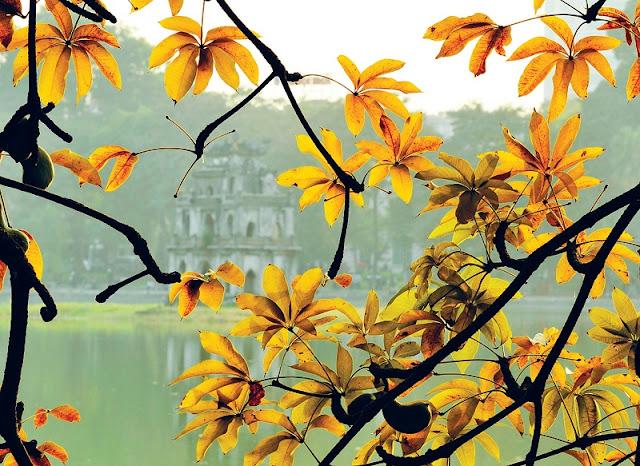 Hanoi in young leaf season 1