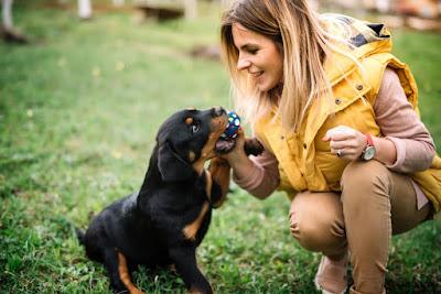 Truco entrenar perro cachorro obediencia