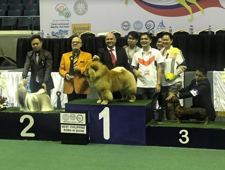 Asia's Biggest Dog Show Hosted in Manila