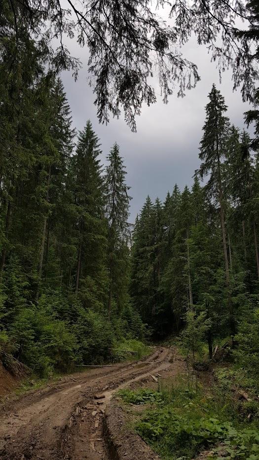 Карпаты, Украина, горы, пейзаж, лес, природа, Ворохта, путешествия, походы, отпуск, Ukraine, Carpathians, nature, travel, journey, landscape, forest,