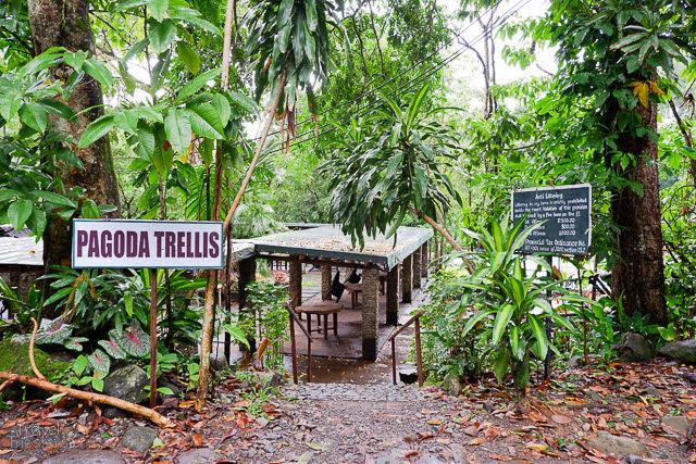 pagoda tellis
