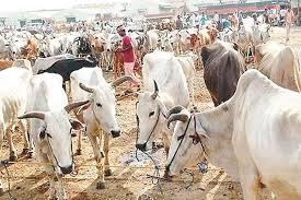 पशुपालन' का अर्थव्यवस्था में महत्वपूर्ण योगदान - animal husbandry  contributes significantly to the economy