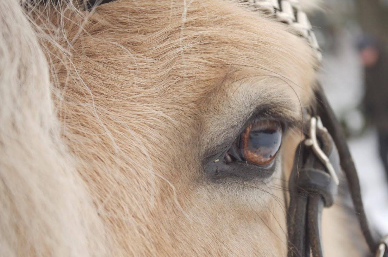HILDAS terapiaa yhdessä eläinten kanssa/ terapi tillsammans med djur