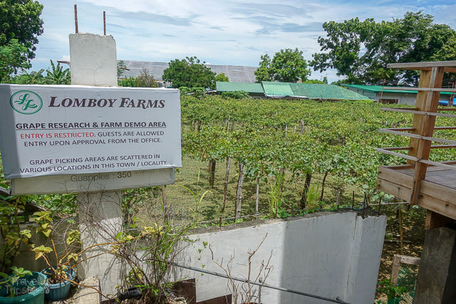 lomboy farms la union