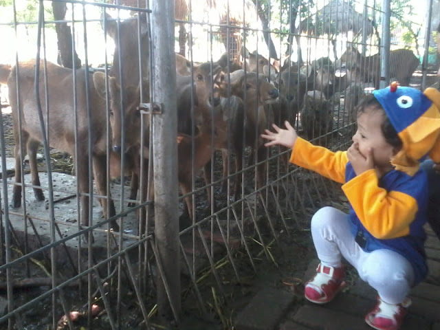 Kebun Binatang Mini di Taman Flora Bratang Surabaya