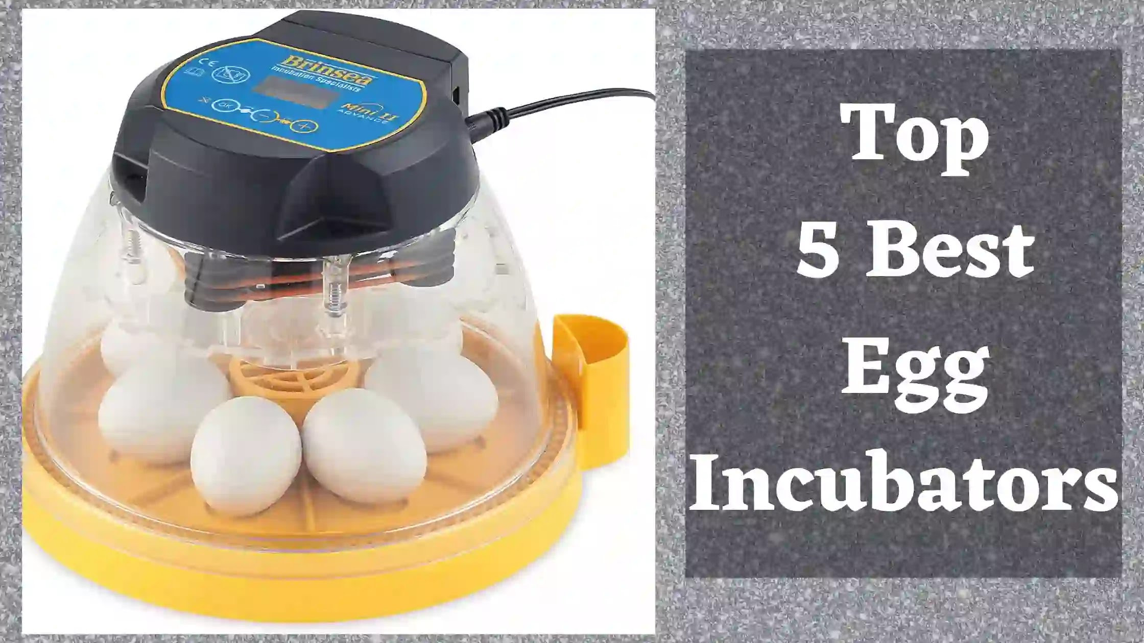 Best Egg incubators review