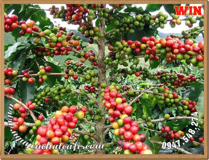 Công ty TNHH Cà phê Nguyễn Dũng là đơn vị chuyên phát triển và cung cấp các giải pháp cà phê sạch bằng công nghệ xanh