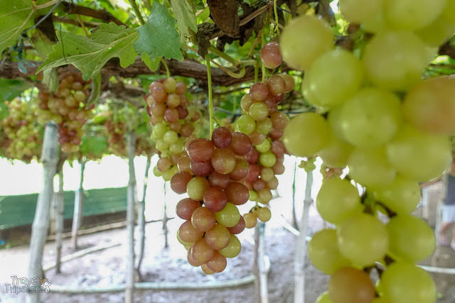 la union grapes
