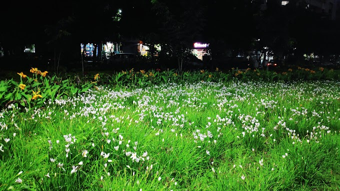 Flowers in Pimple Saudagar Garden